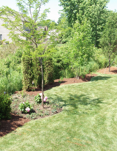 residential tree planting, tree services, lawn care, landscaping company in Wisconsin